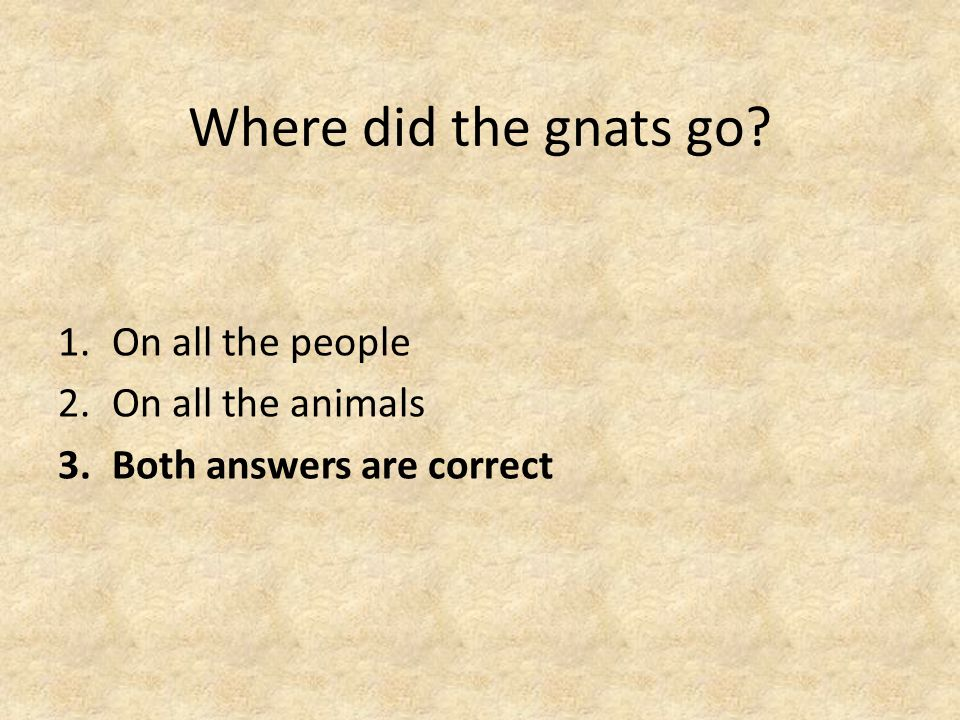 Where did the gnats go 1.On all the people 2.On all the animals 3.Both answers are correct
