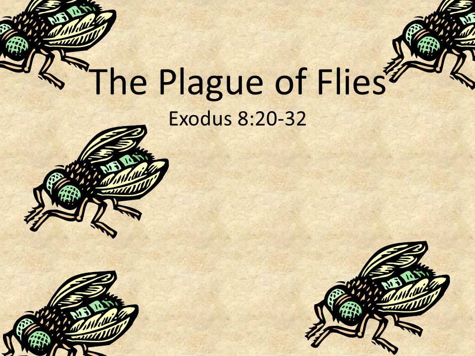 The Plague of Flies Exodus 8:20-32