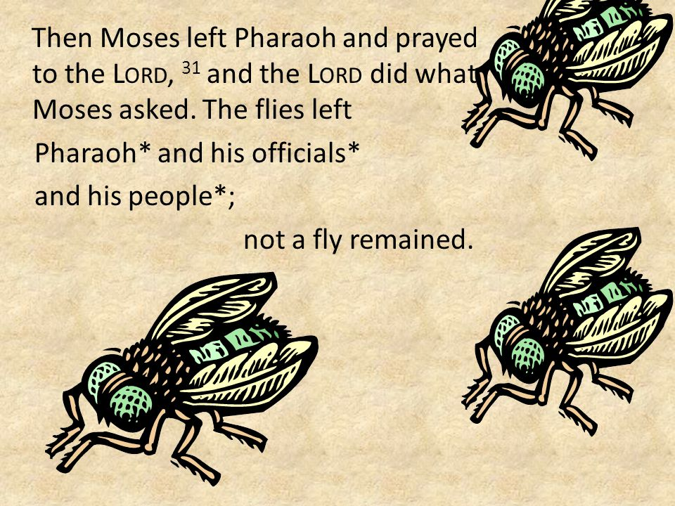 Then Moses left Pharaoh and prayed to the L ORD, 31 and the L ORD did what Moses asked.