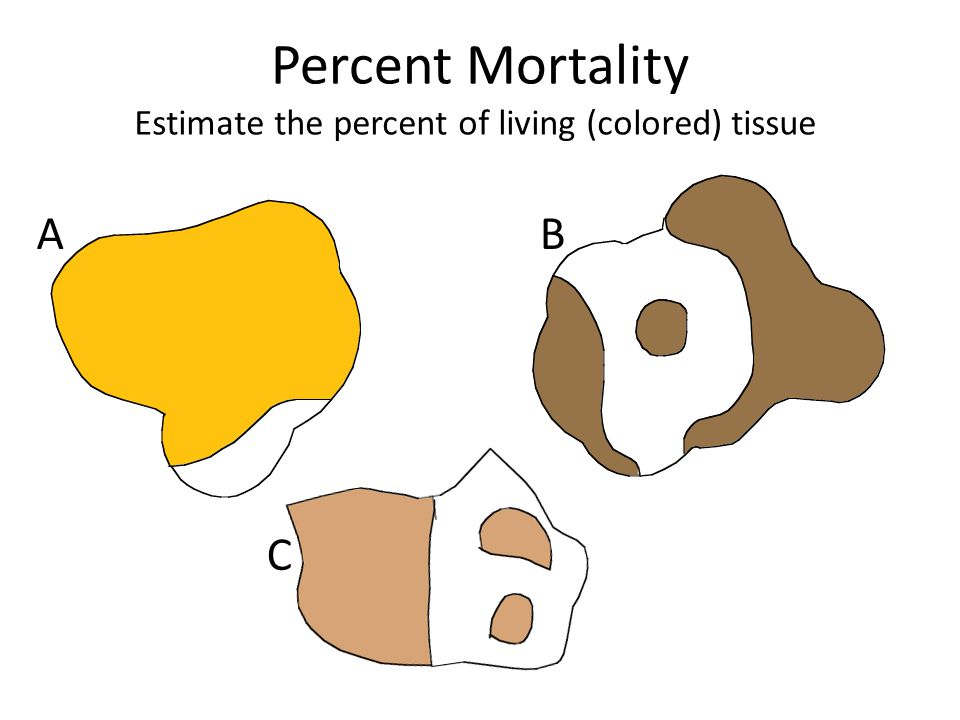 Percent Mortality Estimate the percent of living (colored) tissue AB C