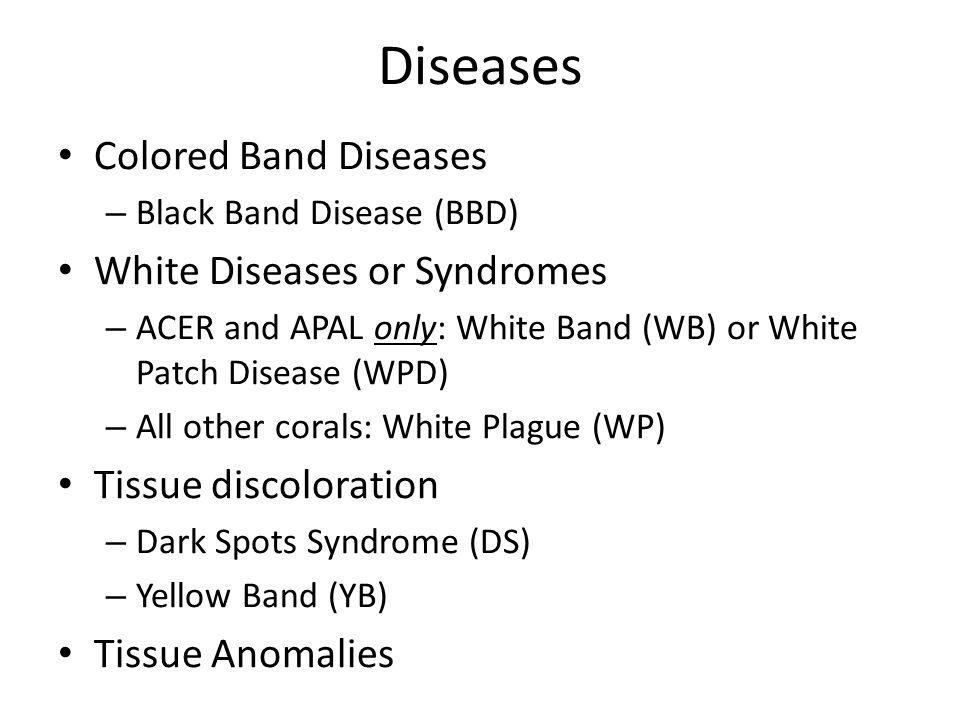 Diseases: Colored Band Diseases Black Band Disease (BBD)