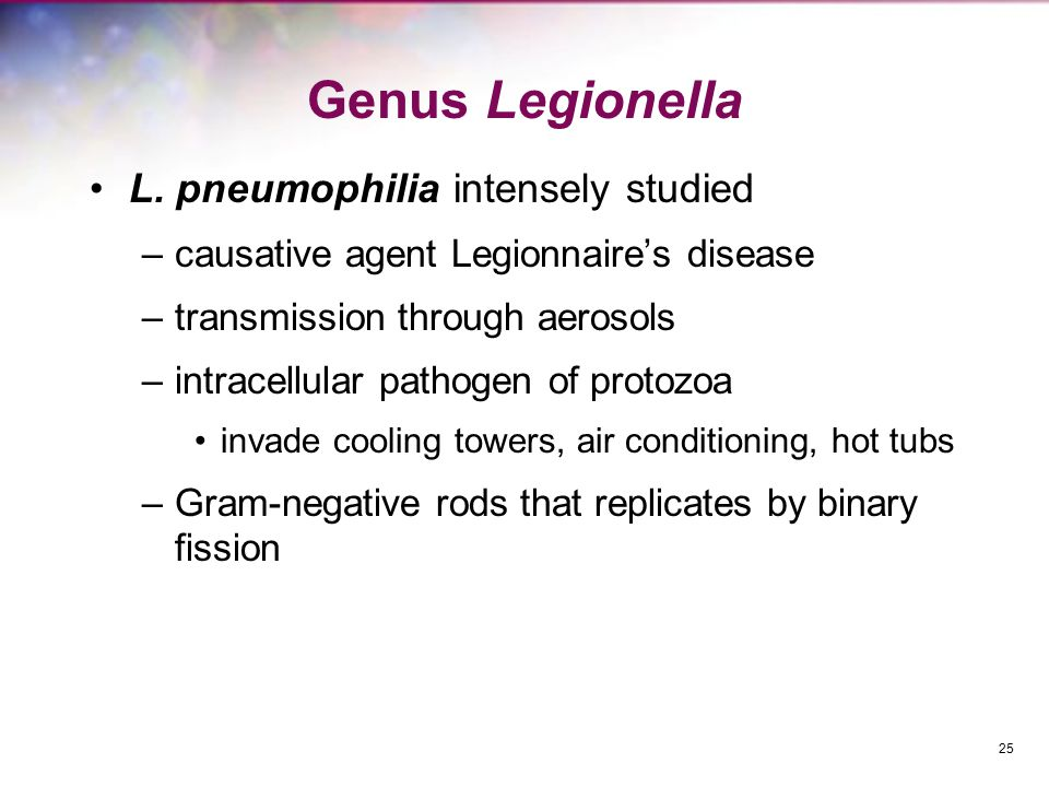 Genus Legionella L. pneumophilia intensely studied –causative agent Legionnaire's disease –transmission through aerosols –intracellular pathogen of pr