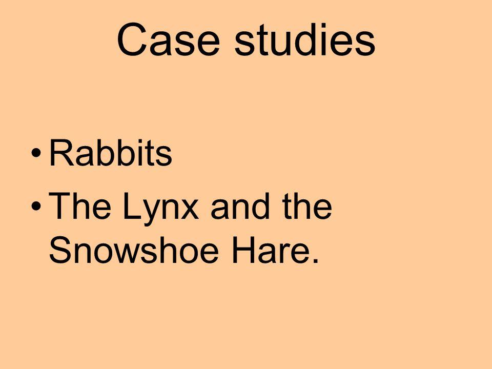 A Snowshoe Hare. - Eaten by Lynxs.