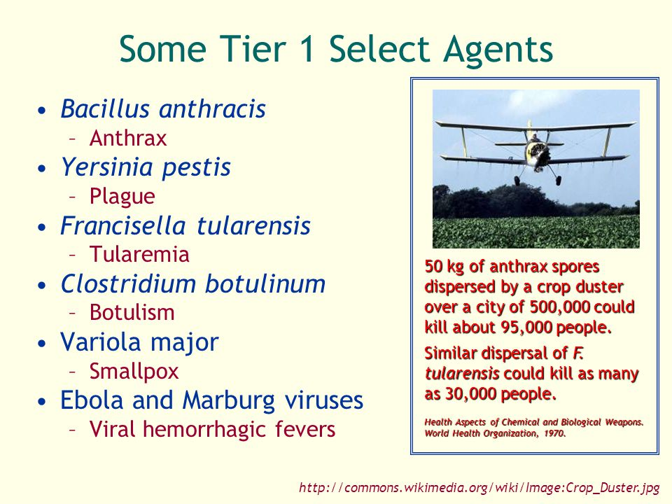Plague as a Weapon Defenses Antibiotics Quarantine Vaccines http://www.nature.com/nm/journal/v11/n9/fig_tab/nm0905-927_F1.html Favoring Use as a Weapon Available in nature Can be spread as an aerosol Person-to-person spread Is often lethal if untreated Limiting Use as a Weapon Cannot survive long in the environment