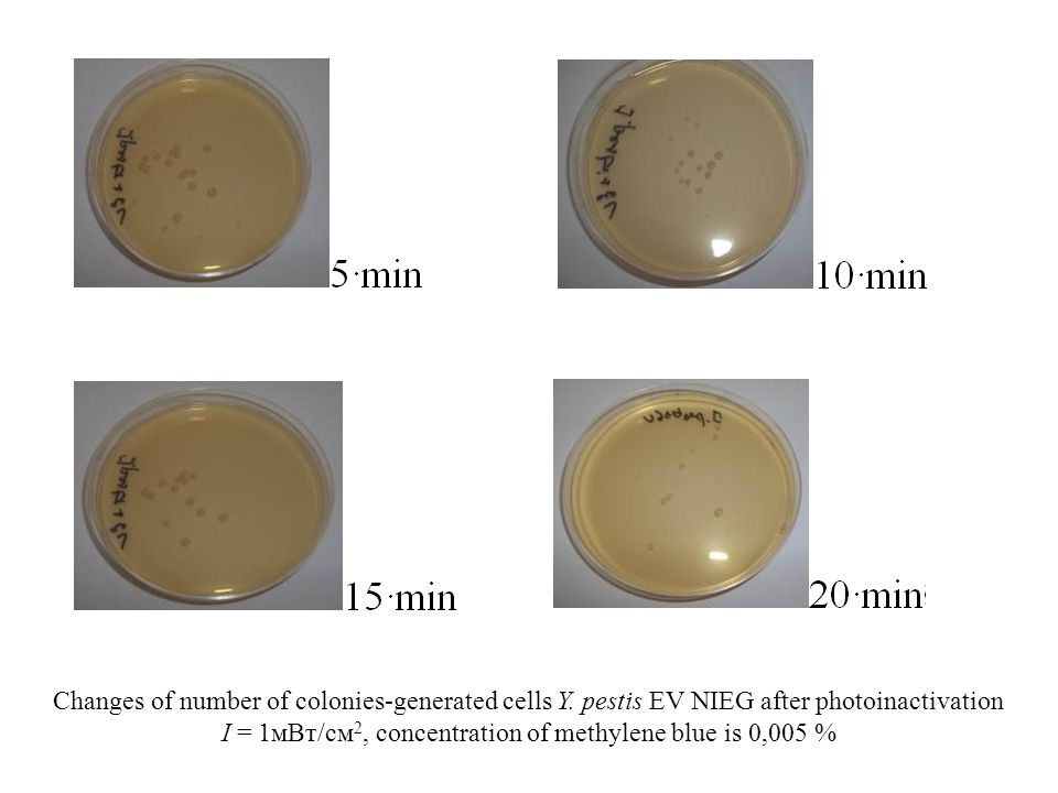 Changes of number of colonies-generated cells Y.