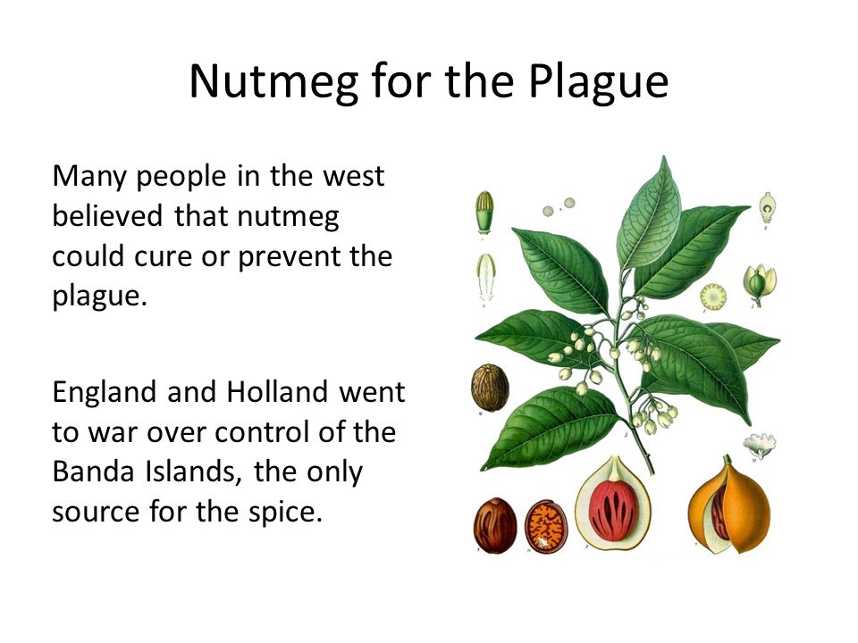 Nutmeg for the Plague Many people in the west believed that nutmeg could cure or prevent the plague.