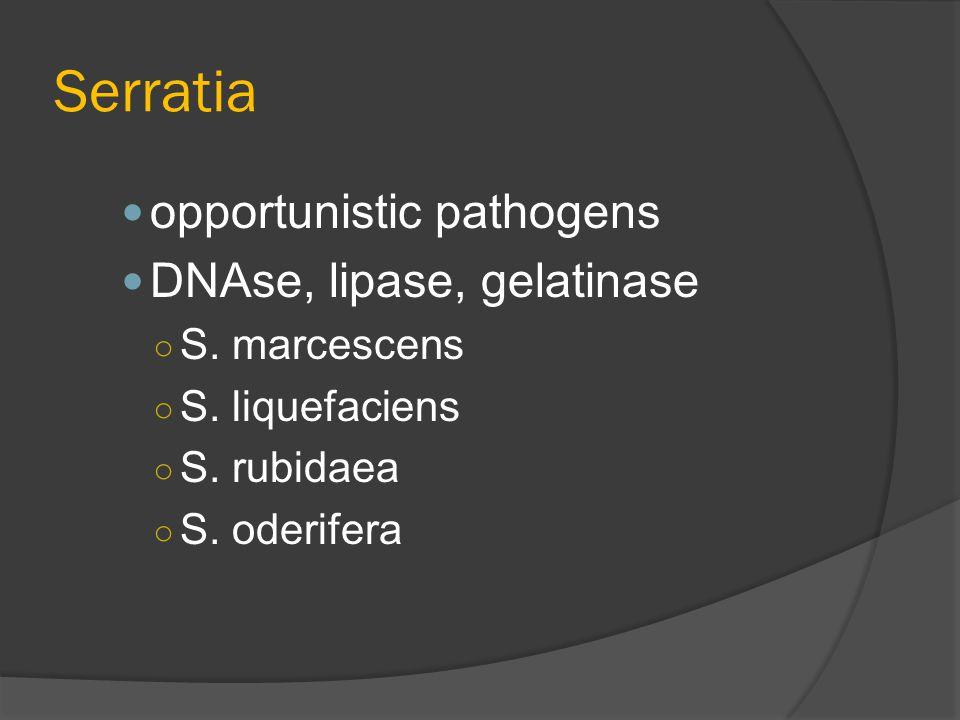 Serratia opportunistic pathogens DNAse, lipase, gelatinase ○ S. marcescens ○ S. liquefaciens ○ S. rubidaea ○ S. oderifera