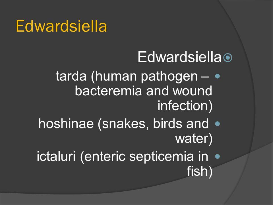 Edwardsiella  Edwardsiella tarda (human pathogen – bacteremia and wound infection) hoshinae (snakes, birds and water) ictaluri (enteric septicemia in