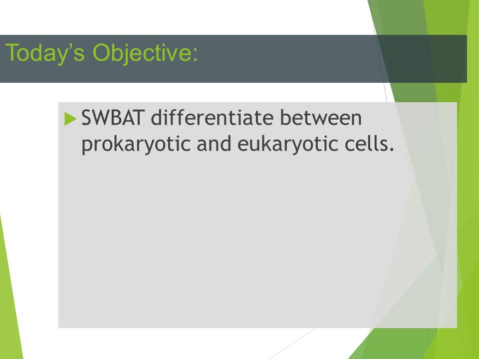 Today's Objective:  SWBAT differentiate between prokaryotic and eukaryotic cells.
