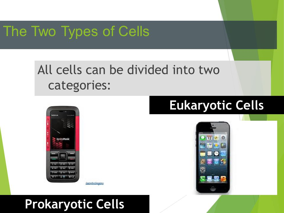 The Two Types of Cells All cells can be divided into two categories: Prokaryotic Cells Eukaryotic Cells