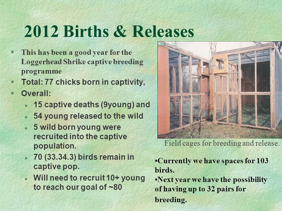 2012 Births & Releases Field cages for breeding and release.