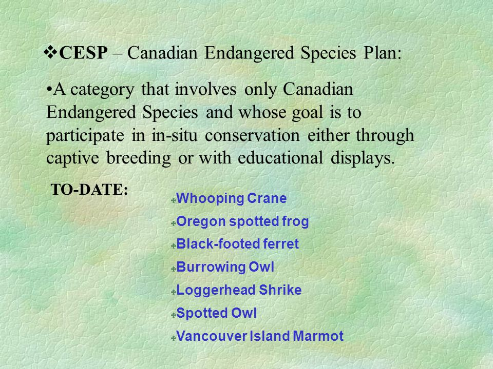  CESP – Canadian Endangered Species Plan: A category that involves only Canadian Endangered Species and whose goal is to participate in in-situ conservation either through captive breeding or with educational displays.