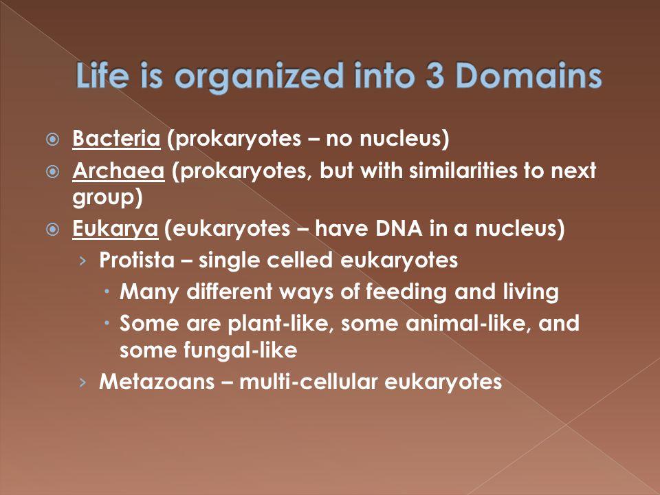  Some characteristics uniquely Archaea › Cell wall has unique molecular structure › Cell membrane has unique components › Some metabolic pathways unique