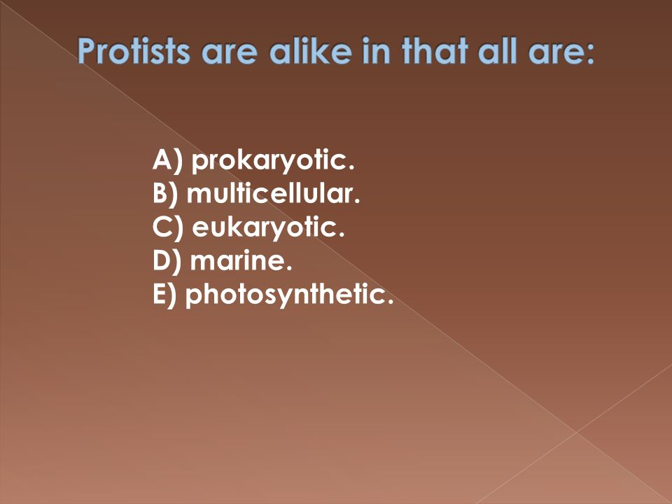 A) prokaryotic. B) multicellular. C) eukaryotic. D) marine. E) photosynthetic.