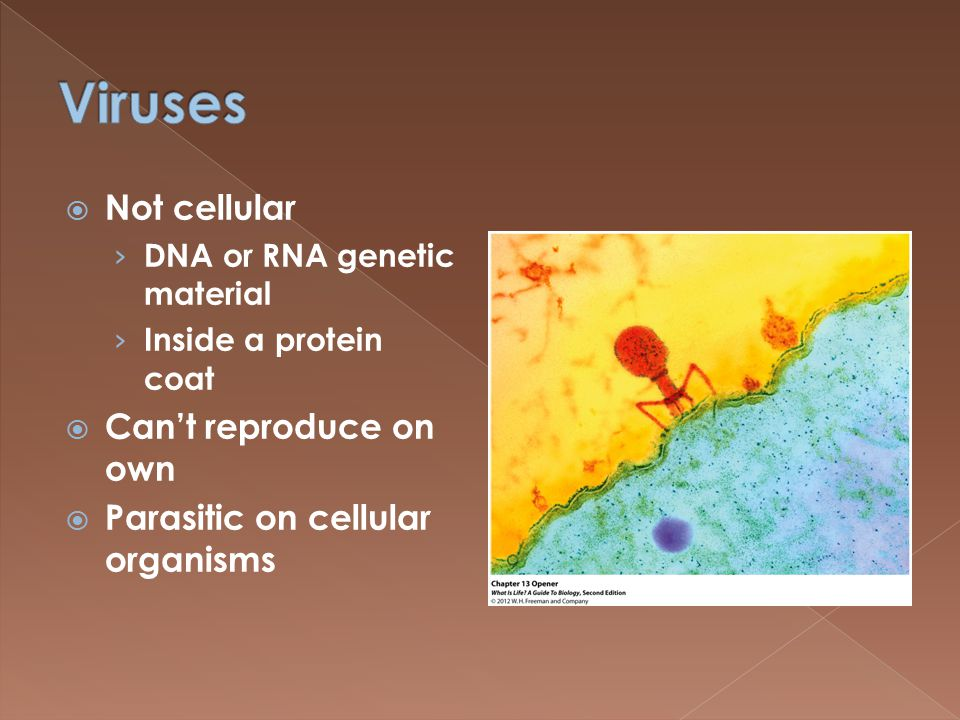  Not cellular › DNA or RNA genetic material › Inside a protein coat  Can't reproduce on own  Parasitic on cellular organisms
