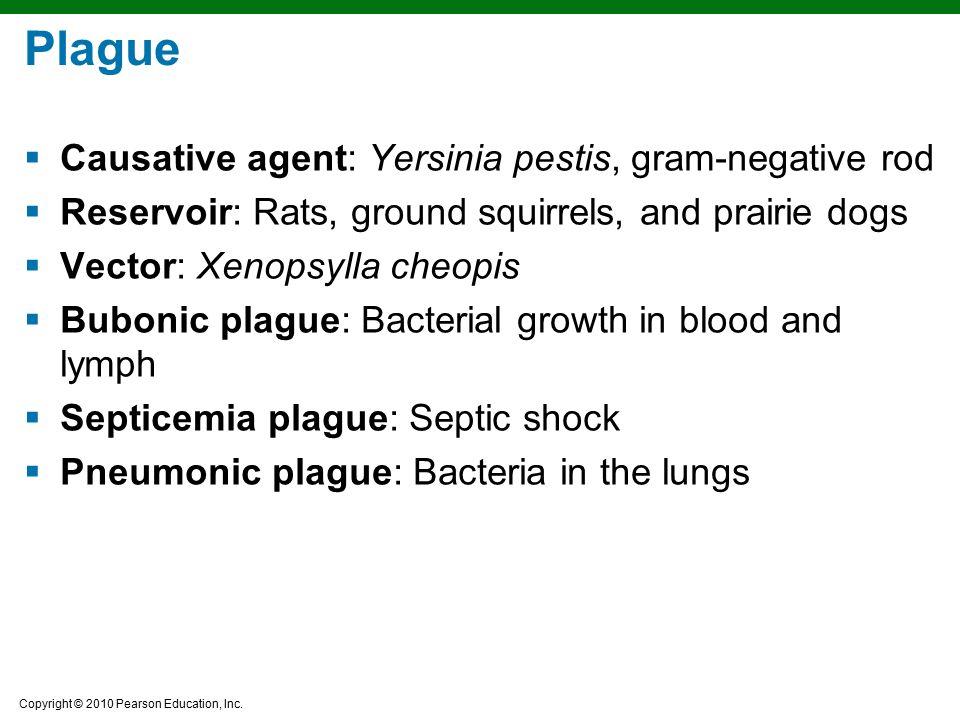 Copyright © 2010 Pearson Education, Inc. Plague  Causative agent: Yersinia pestis, gram-negative rod  Reservoir: Rats, ground squirrels, and prairie