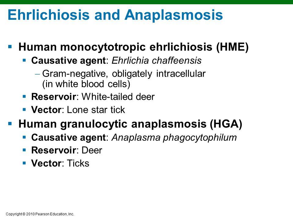 Copyright © 2010 Pearson Education, Inc. Ehrlichiosis and Anaplasmosis  Human monocytotropic ehrlichiosis (HME)  Causative agent: Ehrlichia chaffeen