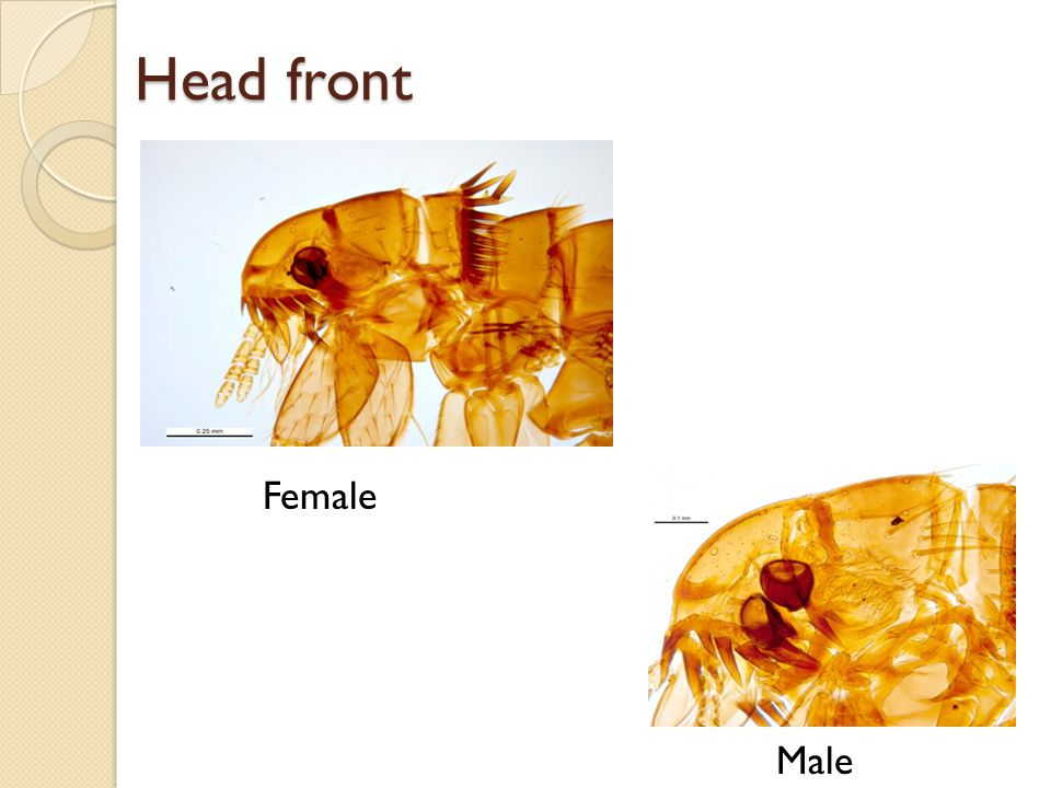 Head front Female Male