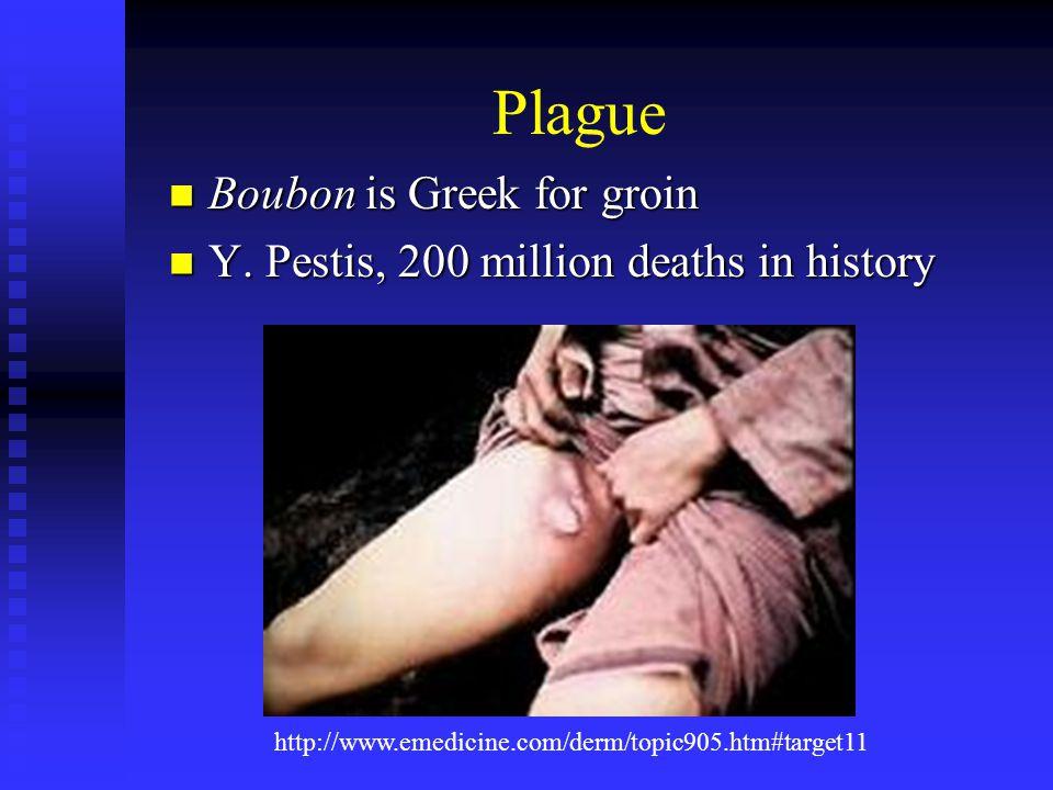 Plague Boubon is Greek for groin Boubon is Greek for groin Y.