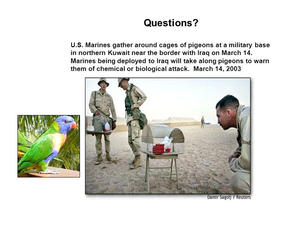 Questions. U.S.