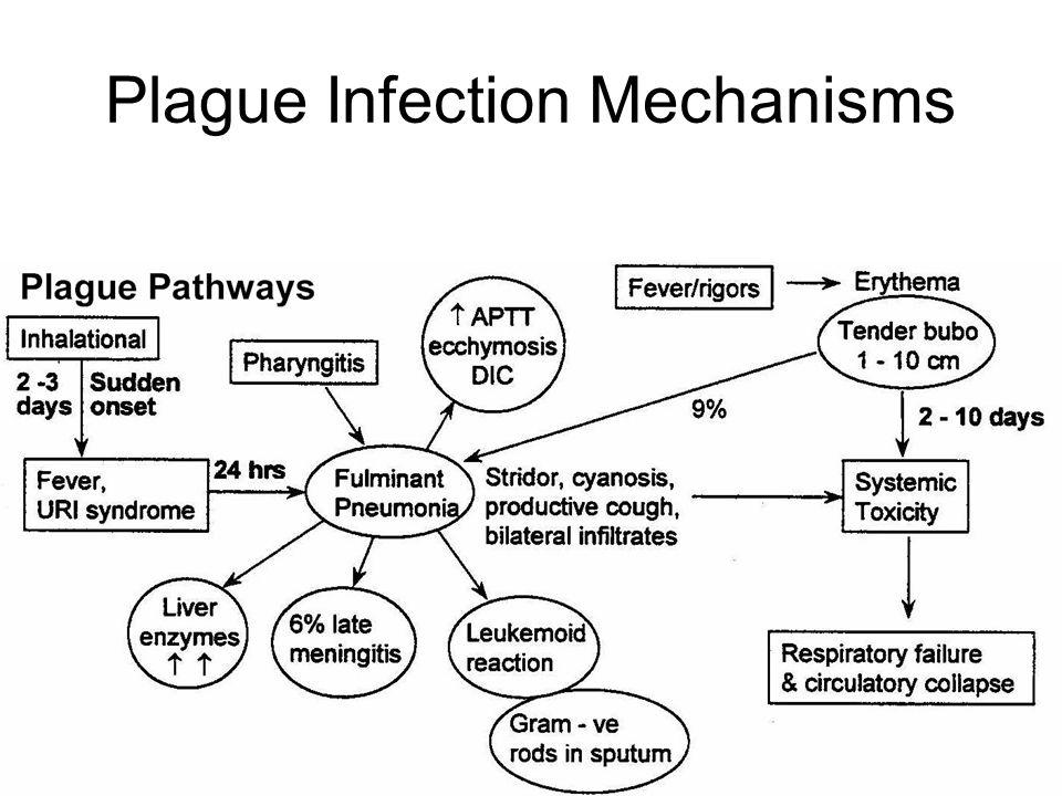 Plague Infection Mechanisms