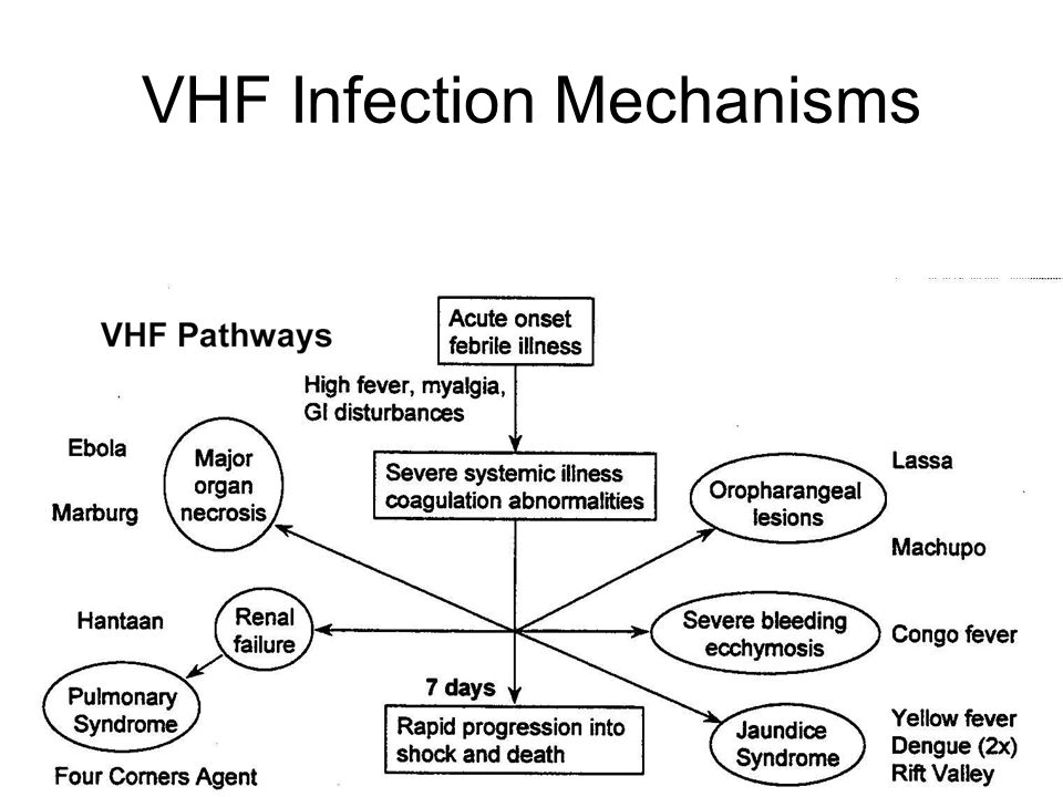 VHF Infection Mechanisms