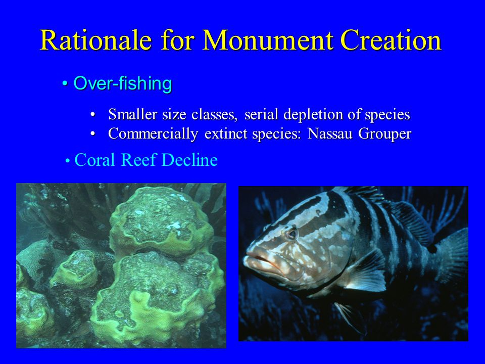 Rationale for Monument Creation Over-fishing Over-fishing Smaller size classes, serial depletion of speciesSmaller size classes, serial depletion of species Commercially extinct species: Nassau GrouperCommercially extinct species: Nassau Grouper Coral Reef Decline