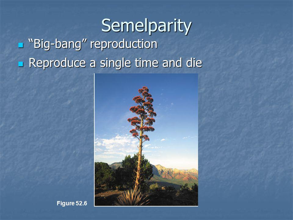 """Semelparity """"Big-bang"""" reproduction """"Big-bang"""" reproduction Reproduce a single time and die Reproduce a single time and die Figure 52.6"""