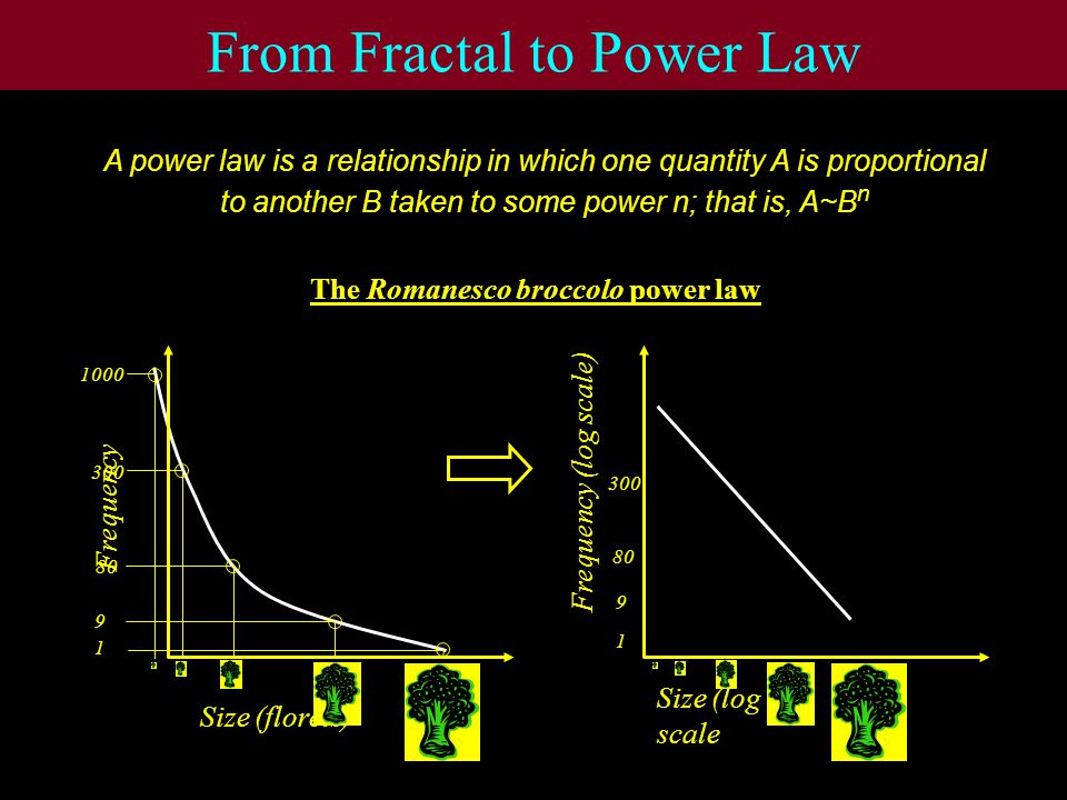 From Fractal to Power Law A power law is a relationship in which one quantity A is proportional to another B taken to some power n; that is, A~B n Size (florets) Frequency The Romanesco broccolo power law 1 9 80 1000 Size (log scale Frequency (log scale) 1 9 80 300