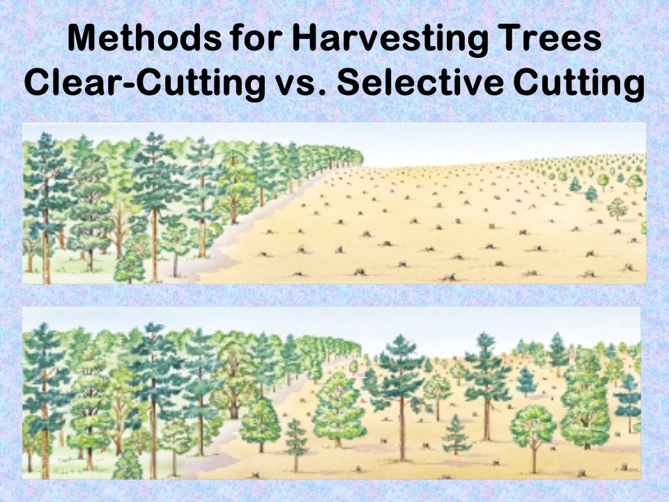 Methods for Harvesting Trees Clear-Cutting vs. Selective Cutting