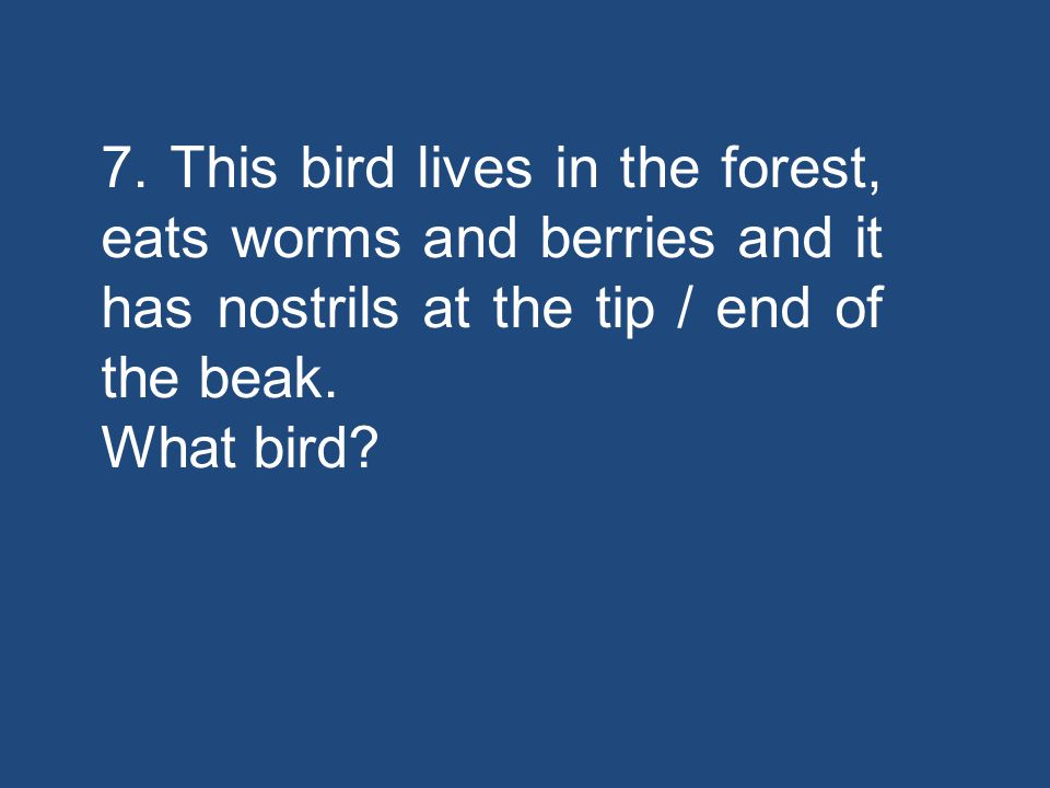 7. This bird lives in the forest, eats worms and berries and it has nostrils at the tip / end of the beak. What bird?