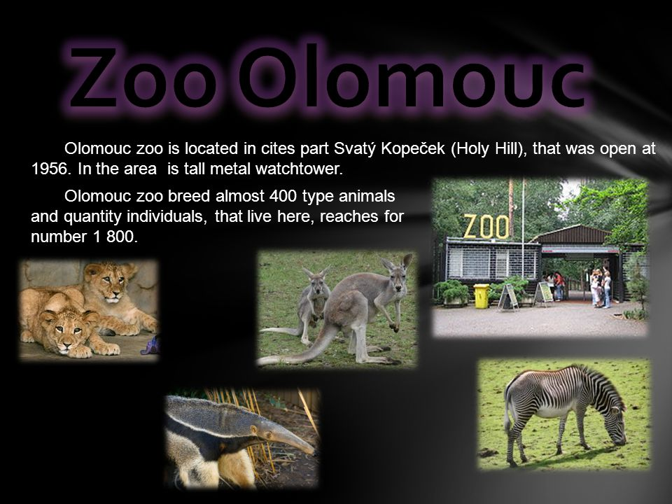 Olomouc zoo is located in cites part Svatý Kopeček (Holy Hill), that was open at 1956. In the area is tall metal watchtower. Olomouc zoo breed almost