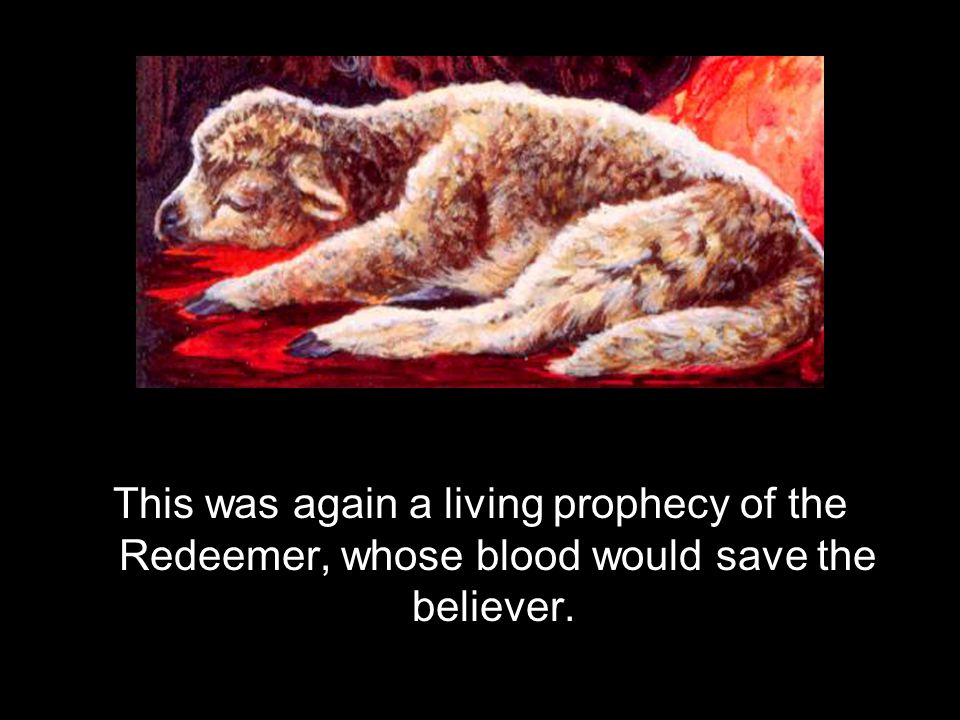 This was again a living prophecy of the Redeemer, whose blood would save the believer.