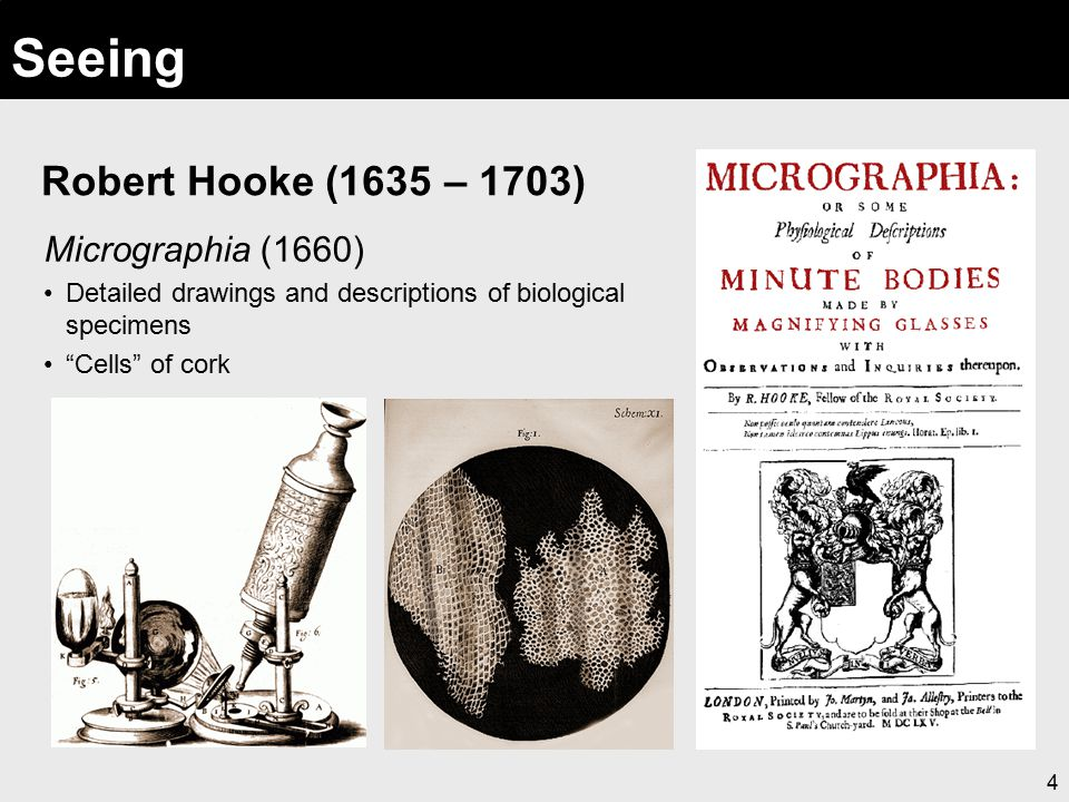 """4 Seeing Robert Hooke (1635 – 1703) Micrographia (1660) Detailed drawings and descriptions of biological specimens """"Cells"""" of cork"""