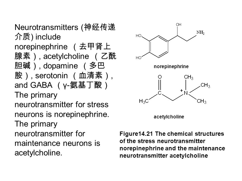 Neurotransmitters ( 神经传递 介质 ) include norepinephrine (去甲肾上 腺素), acetylcholine (乙酰 胆碱), dopamine (多巴 胺), serotonin (血清素), and GABA ( γ- 氨基丁酸) The primary neurotransmitter for stress neurons is norepinephrine.