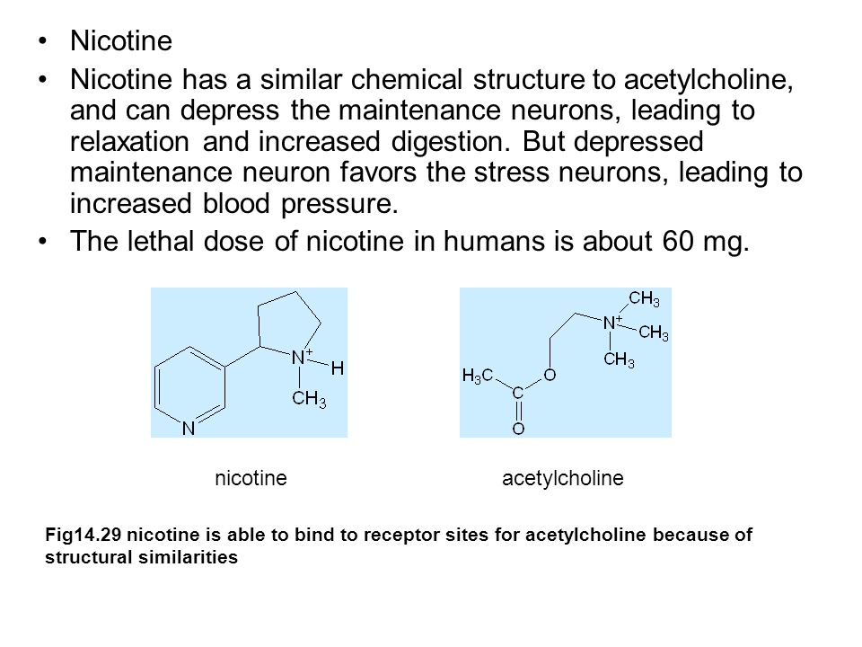 Nicotine Nicotine has a similar chemical structure to acetylcholine, and can depress the maintenance neurons, leading to relaxation and increased digestion.
