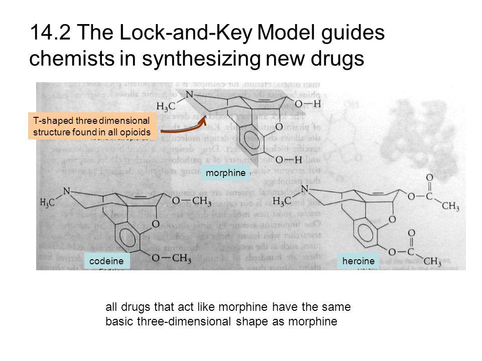 Opioid analgesics Opioids mimic the action of endorphin ( 内啡肽 ).
