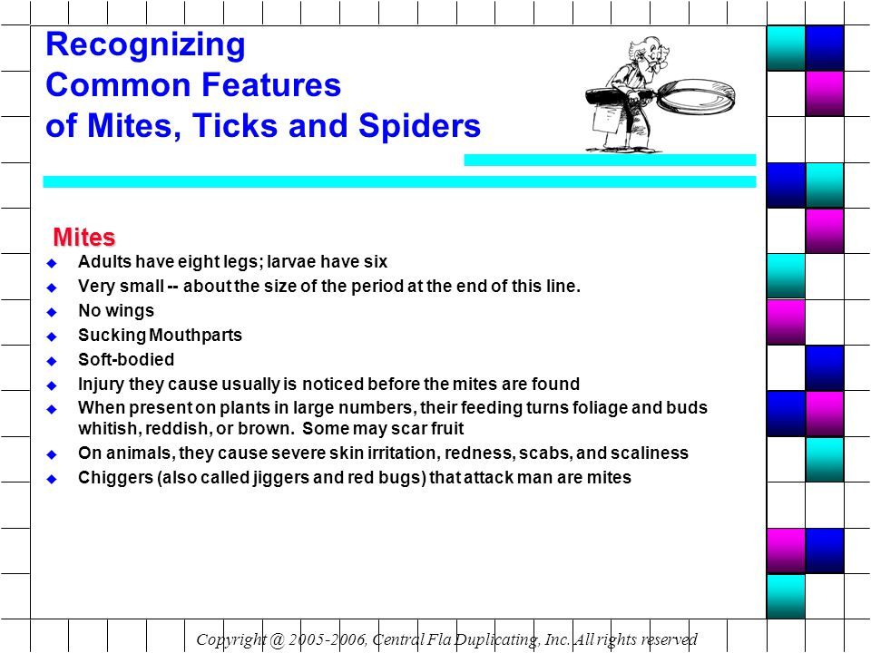 Recognizing Common Features of Mites, Ticks and Spiders Mites u Adults have eight legs; larvae have six u Very small -- about the size of the period at the end of this line.