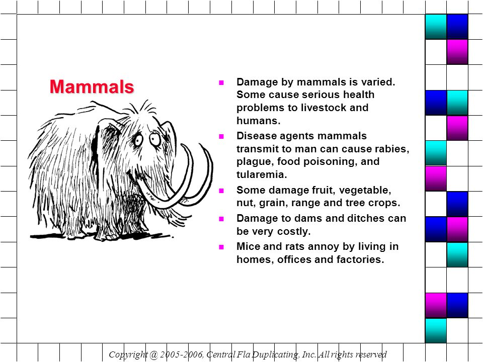 Mammals n Damage by mammals is varied. Some cause serious health problems to livestock and humans.