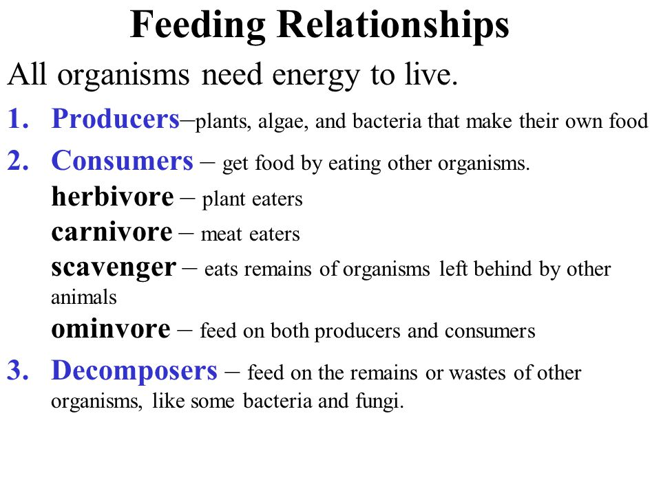 Feeding Relationships All organisms need energy to live.