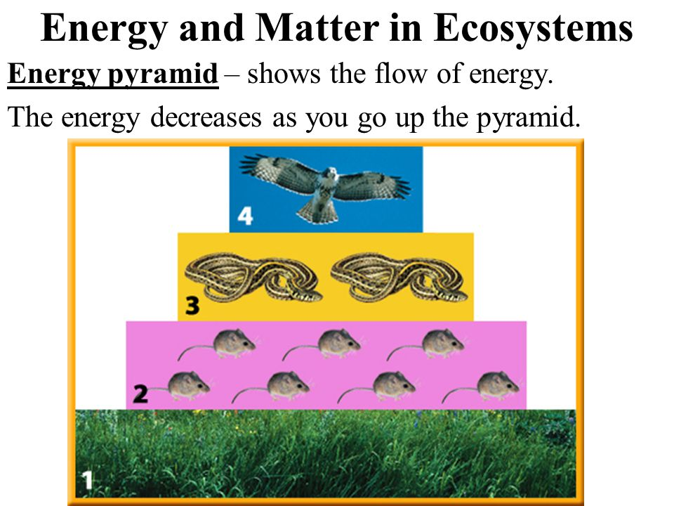 Energy and Matter in Ecosystems Energy pyramid – shows the flow of energy.