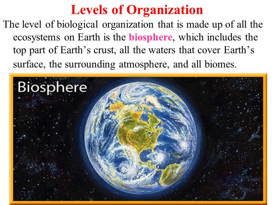 Levels of Organization The level of biological organization that is made up of all the ecosystems on Earth is the biosphere, which includes the top part of Earth's crust, all the waters that cover Earth's surface, the surrounding atmosphere, and all biomes.