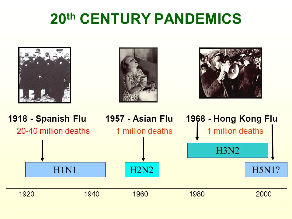 20 th CENTURY PANDEMICS H1N1H5N1?H2N2 H3N2 1918 - Spanish Flu1957 - Asian Flu1968 - Hong Kong Flu 20-40 million deaths1 million deaths 1920 1940 1960