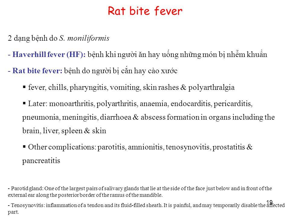19 Rat bite fever 2 dạng bệnh do S. moniliformis - Haverhill fever (HF): bệnh khi người ăn hay uống những món bị nhễm khuẩn - Rat bite fever: bệnh do