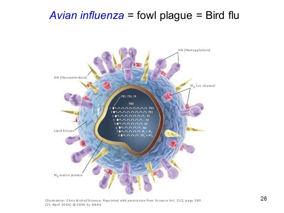 26 Avian influenza = fowl plague = Bird flu