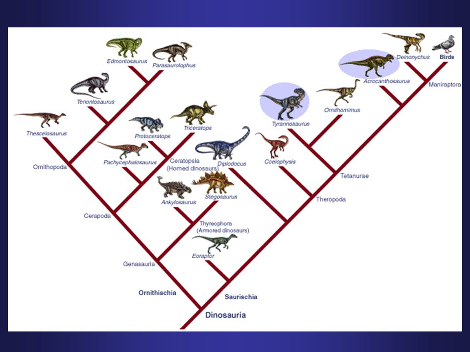 Why scientific names.Q. What is the largest wild feline (cat) in the US.