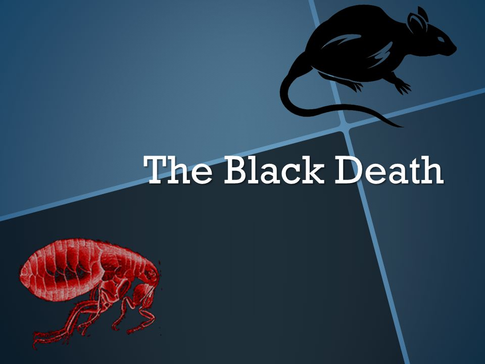You must know.1.What is the Black Death . 2.What caused the Black Death.
