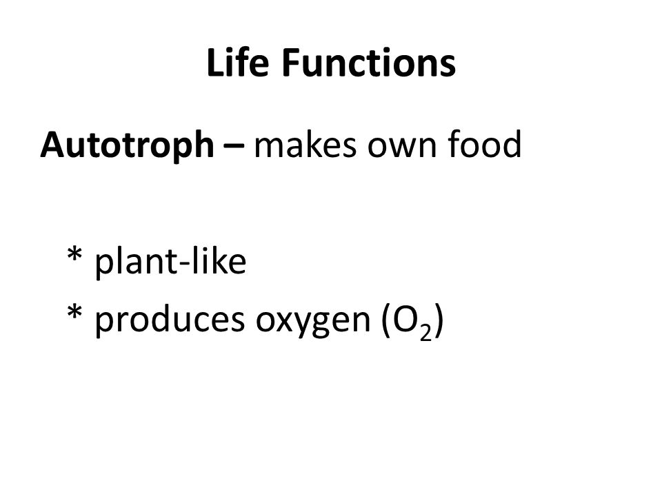 Life Functions Autotroph – makes own food * plant-like * produces oxygen (O 2 )