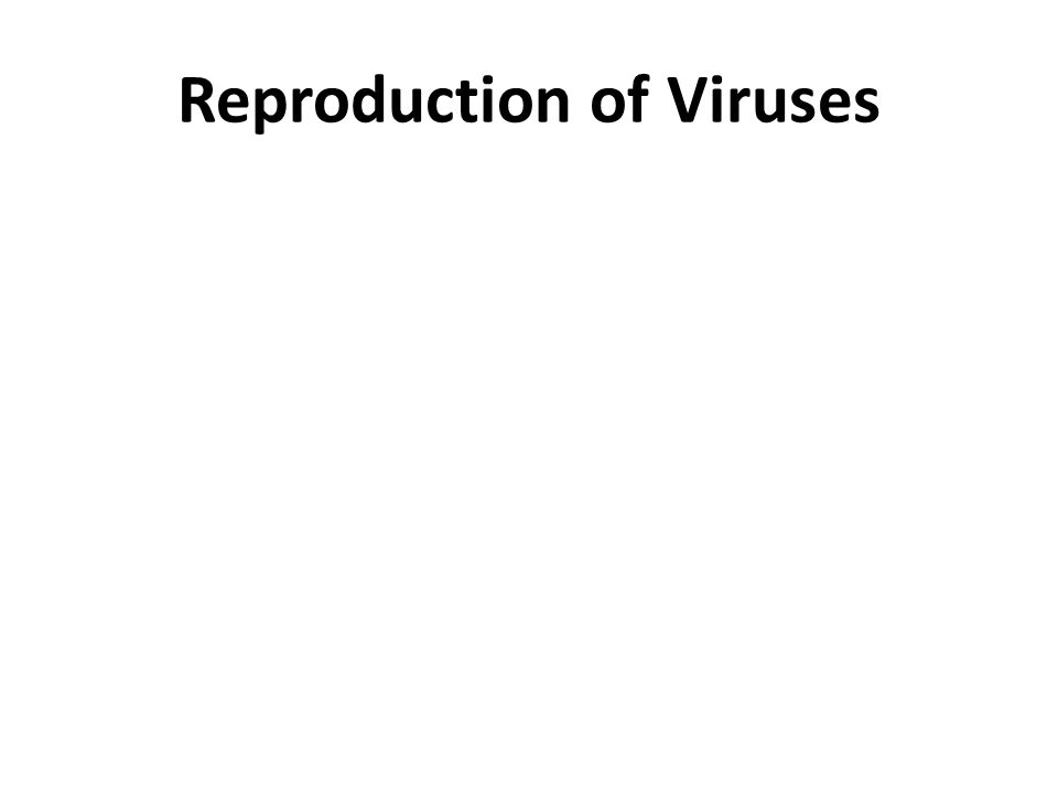Reproduction of Viruses