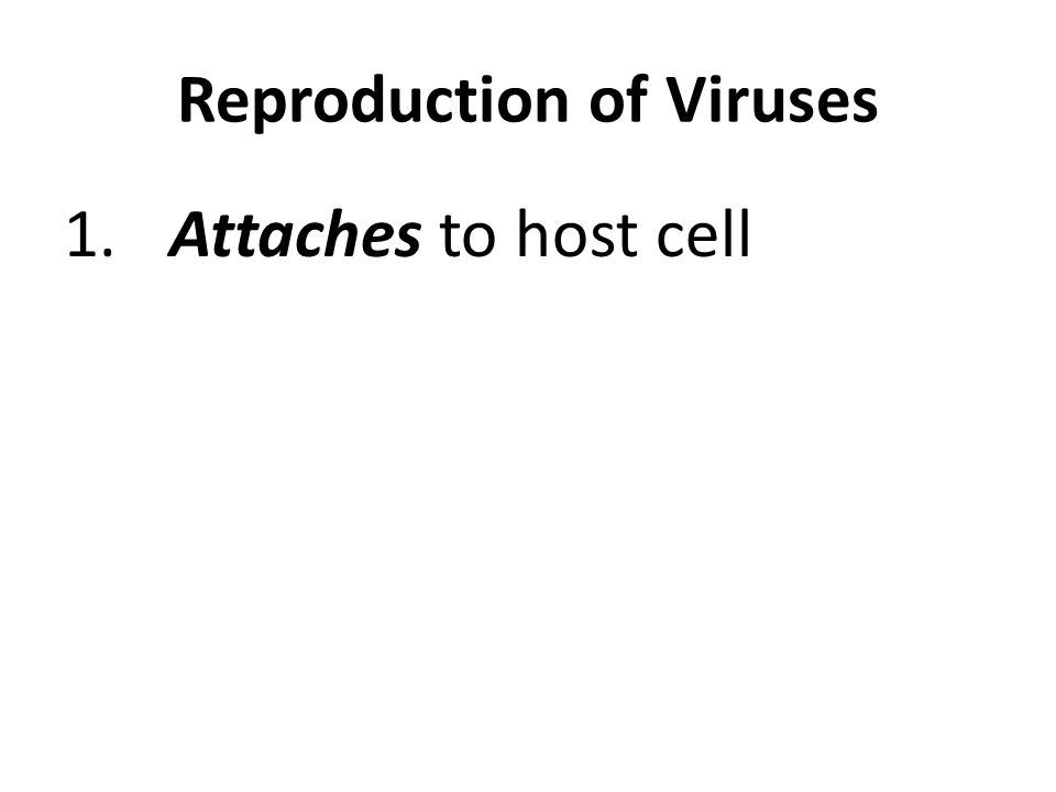 1.Attaches to host cell